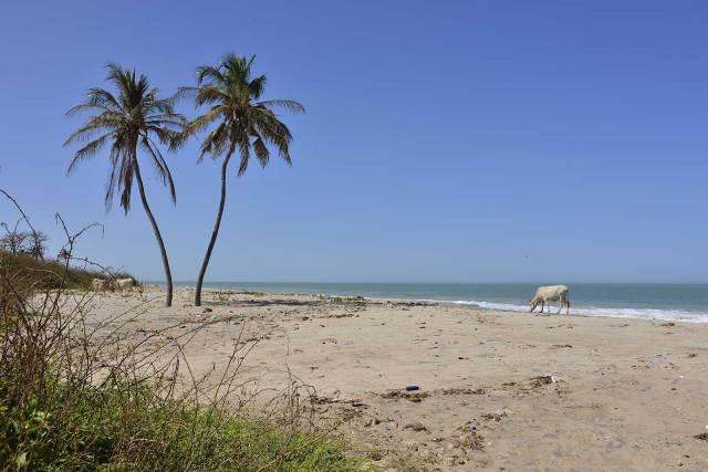 Photo 2 du Bienvenue à l'Ecolodge de Palmarin, séjour au bout du monde dans un site rare et époustouflant.