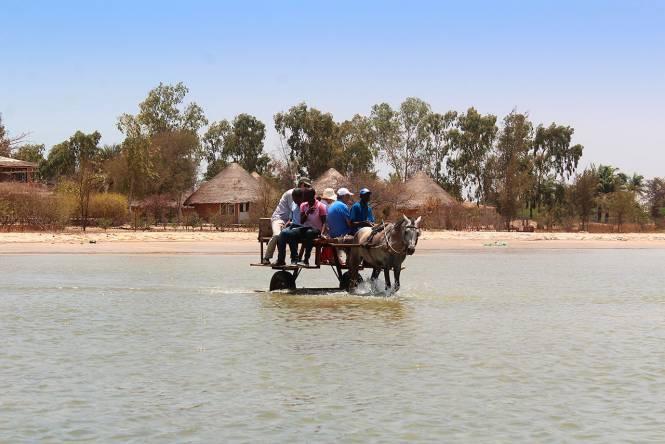 Photo 24 du Activités dans un lodge situé dans la plus belle région du Sénégal.
